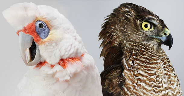 These Charismatic Birds Are The Ultimate Models For A Photoshoot